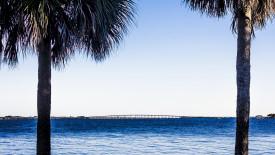 Free 4K Wallpaper   Causeway Through Palms