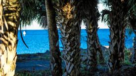 Free HD Wallpaper | River Palm Trees