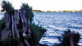 Free Desktop Background   Stump on the River