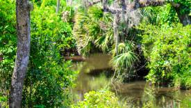 Swamp River Wallpaper
