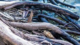 roots – Desktop Background