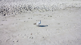 Free Beach Wallpaper Seagull on the beach