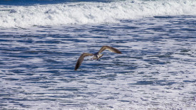 Sea Gull on the Coast