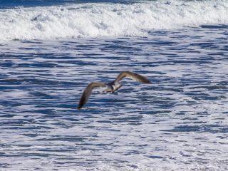 Sea Gull on the Coast