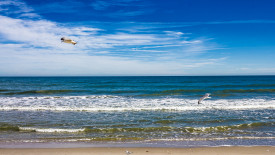 Seagulls at the Beach Wallpaper