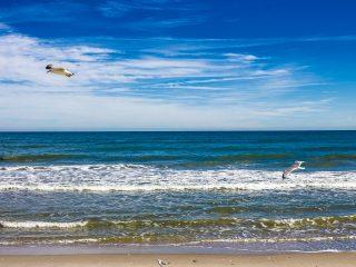 Seagulls at the Beach Wallpaper