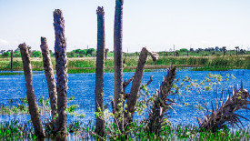 View Across the Water at Viera Wetlands