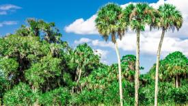 3 Palms Desktop Background