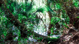 4k Everglades Wallpaper