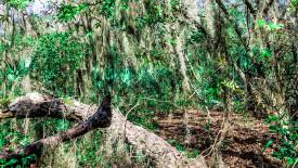 Florida Everglades Wallpaper