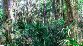 HD Florida Wilderness