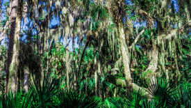 HD Spanish Moss Wallpaper