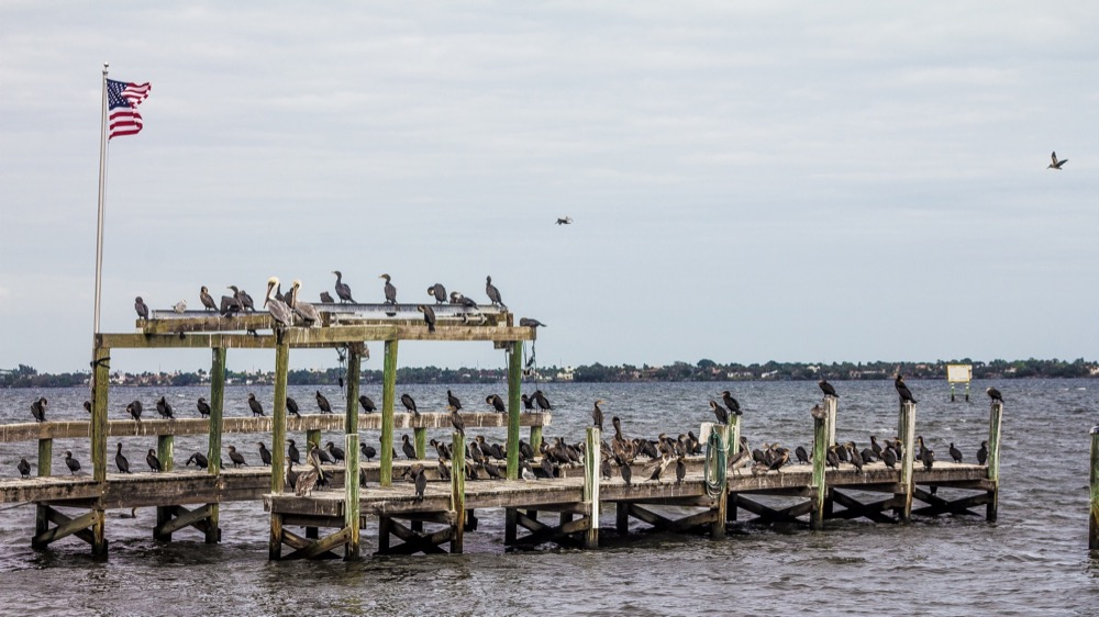Birds on a Dock – Desktop Background